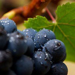 centralina per cantina vino